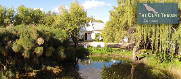 THE OLIVE THRUSH COTTAGE, PRINCE ALBERT